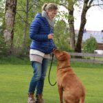 Hundetraining am Schliersee