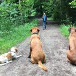 Hundeschule Schliersee