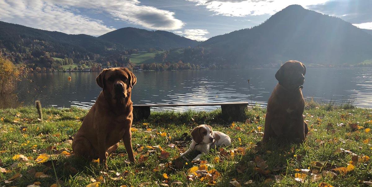 Hundeschule Miesbach