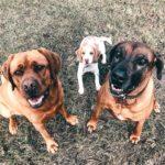 Hundetraining Schliersee
