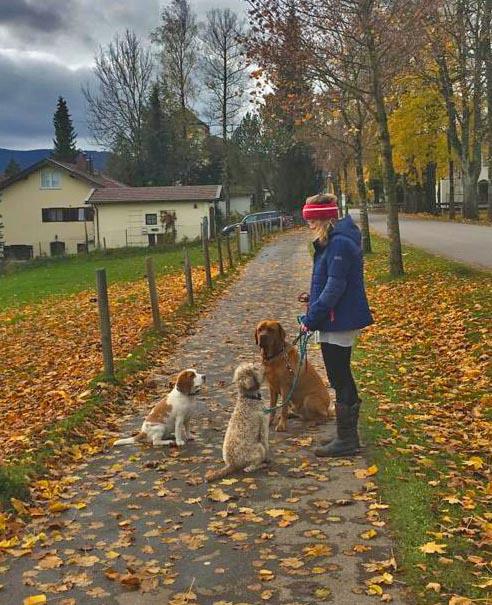 Hundetraining in Miesbach